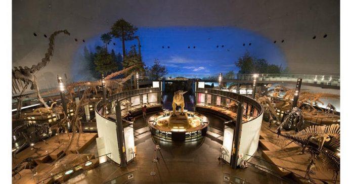 日本恐龍化石大探索